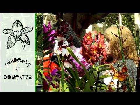 Scavenger Hunt At Dublin Orchid Fair