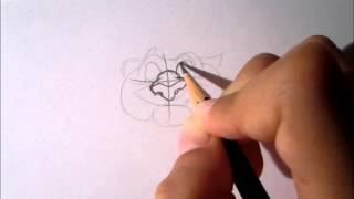 Disney-Learn to draw Rajah (from Aladdin)