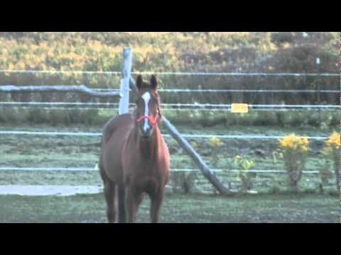 E(q)Harmony: If horses could make dating videos