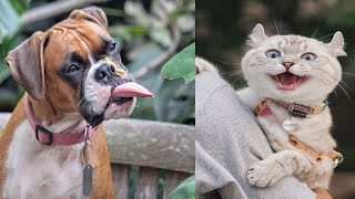 Funny Cats and Dogs Videos Compilations | try not to laugh | Funny Animals Factory