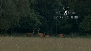 Le Cerf Pirate -  Instants de Brame