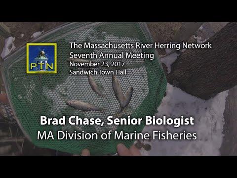 Brad Chase Senior Marine Fisheries Biologist Massachusetts River Herring Network