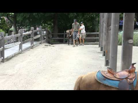 Atharva's first pony ride @ Turtle Back Zoo, New Jersey - 2014