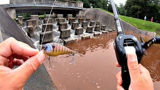 FLASH FLOOD Draws BIG Fish to Urban Spillway!!!