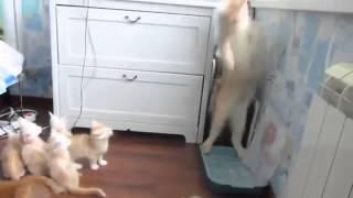Мама-кошка с котятами. Смех да и только.
