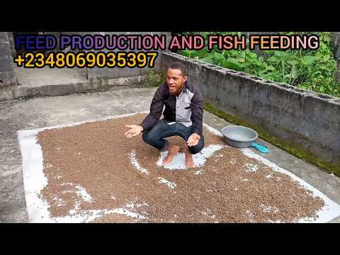 TOP SECRET ....HOW TO DOUBLE YOUR PROFIT IN FISH FARMING; FISH FEED PRODUCTION AND FEEDING...