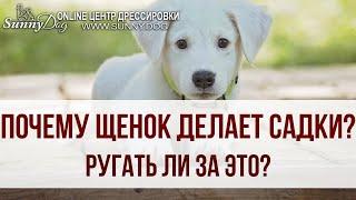Почему щенок делает садки? Что нужно делать? Ругать ли собаку за это?