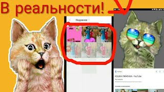 Кошка Лимонка в реальности!😱Кто она!?Как выглядит!?Все здесь!!!