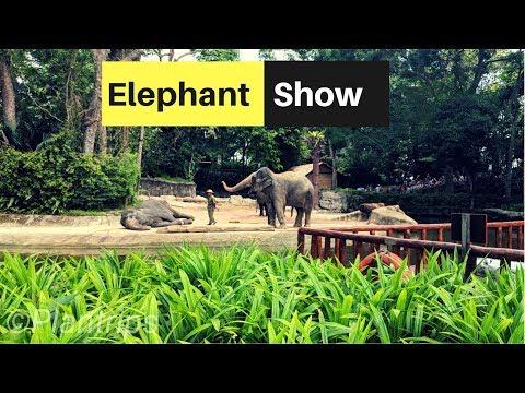 Elephant Show - Singapore zoo 4k