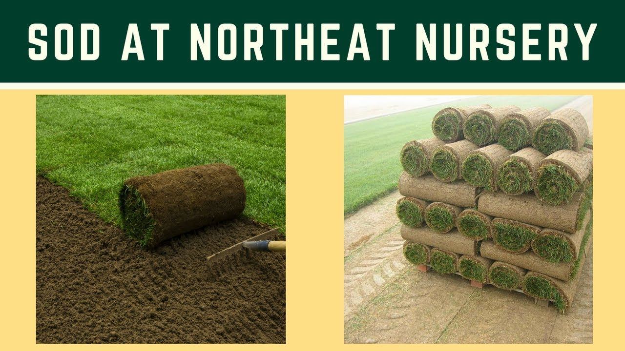 Ing Sod At Northeast Nursery