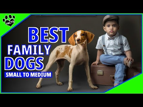Best Family Dogs Small to Medium