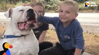 Boy Helps Hundreds of Dogs Find Homes With Heartwarming Videos | The Dodo