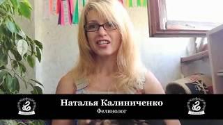 Наталья Калиниченко (фелинолог) о работе с Karagez Web Studio.