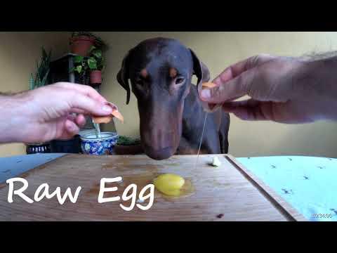 Doberman Taste Tests Foods