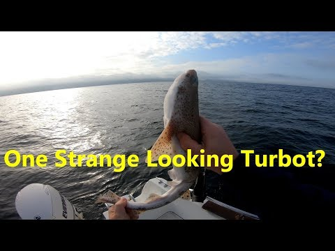Search For The Elusive Manx Turbot - 4K Fishing