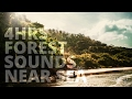 4 Hrs Forest Sounds Near Sea