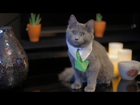 What If Cats Could Buy And Sell Real Estate
