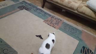 cat catches bat in the air