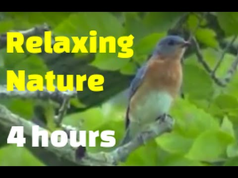 Relaxing Nature - Morning Birds - Thousands of Peaceful Videos Wildlife Stunning Scenic !