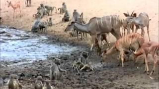 ANIMAL WORLD : Last Feast of The Crocodiles