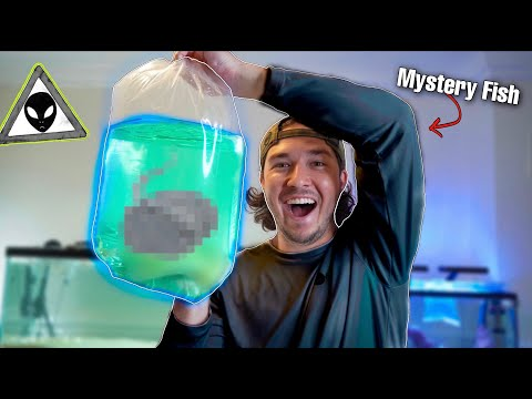 WE BOUGHT MYSTERY FISH BOX OFF The INTERNET!