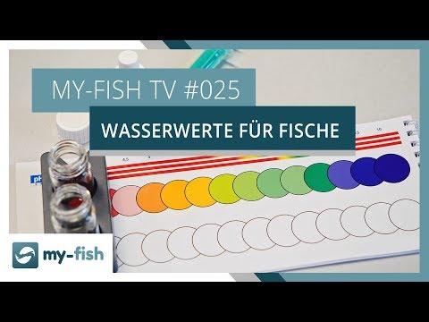 Die wichtigsten Wasserwerte für Fische | my-fish TV