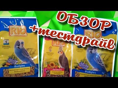Чем кормить волнистого попугая в домашних условиях кроме корма