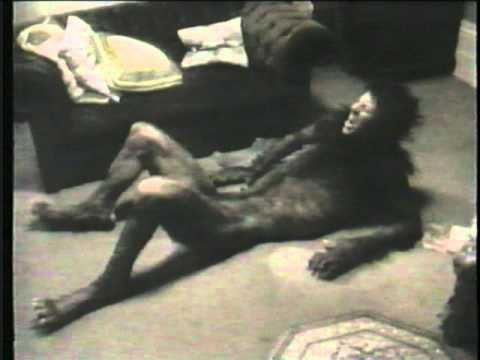 An American Werewolf in London  - Making of the Werewolf -  FX Rick Baker