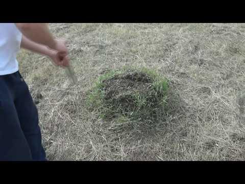 уничтожение муравьев на