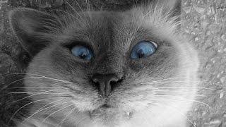 Приколы про животных или вся злость котов   Jokes about animals 2015