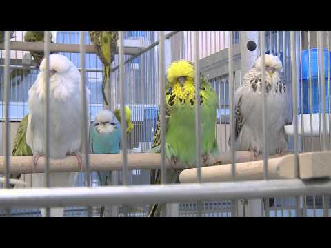 One day in Budgie Land