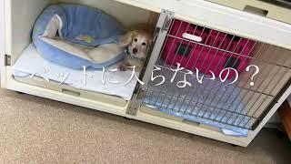 ワンちゃんたち thumbnail
