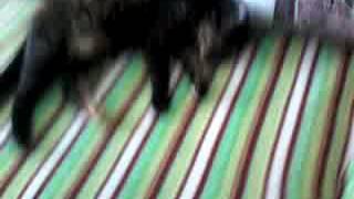 Моя ленивая кошка, не хочет вставать!