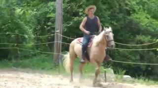 Мой первый урок верховой езды с Eldorado