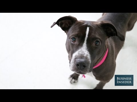 Here's The Truth About Pit Bulls