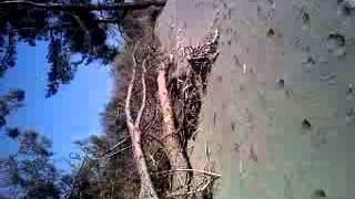 11марта Пицунда дикий пляж   2012(Это видео загружено с телефона Android., 2012-03-11T12:21:38.000Z)