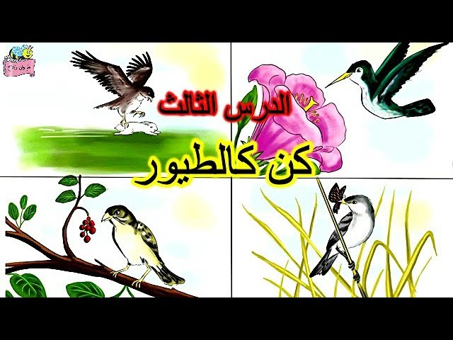 الدرس الثالث (#كن_كالطيور)  للصف الرابع