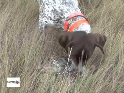 Montana Bird Hunting Part 1 Youtube