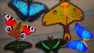 !!!WOW!!! Butterflies and Moths compilage (HD)