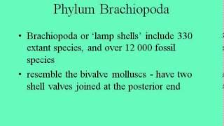 Lophophores