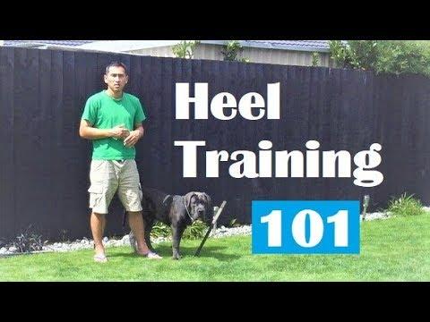 Master 'Heel' Walk like a Pro. Off Leash Dog Training