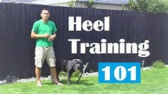 Master 'Heel' Walk like a Pro. Off Leash Dog Training