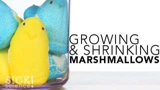 Growing and Shrinking Marshmallows #132