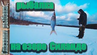 Озеро Силанде Зимняя рыбалка в Ленинградской области
