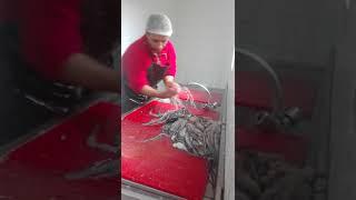 Gambar cover طريقة تنضيف سمك اخطبوط او polpe