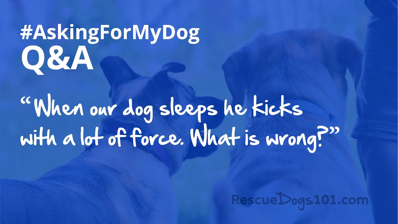 Dog kicking back legs while sleeping – [Q&A] #AskingForMyDog