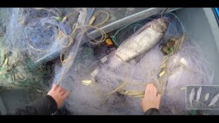 Рыбалка на сети Большая вода Рыба разбрелась Рыбалка на Амуре