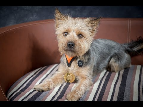 Max - Yorkshire Terrier - 4 Weeks Residential Dog Training