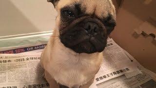 Puppy Hates Potty Training