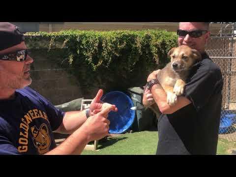 Dog & Joe Sho - #Fursday - Scooter